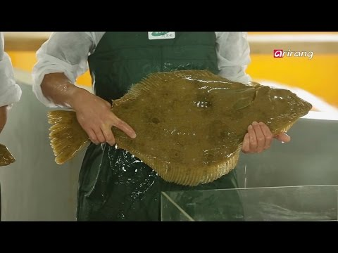 Arirang Special(Ep.320) Korean Flatfish _ Full Episode