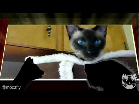 La Gata que Habla / Locuras Animales / Video Divertido.