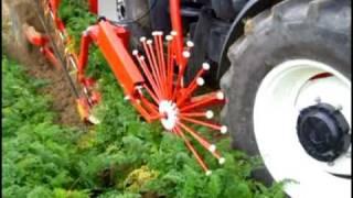 Weremczuk - ALINA SUPERNOVA - kombajn do zbioru warzyw korzeniowych (carrot harvester)