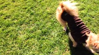 Playing Bally with multiple dogs -clever dog tricks-