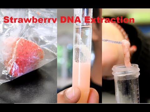 How to Extract DNA out of a Strawberry - YouTube