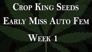 Early Miss Auto - Seedling time lapse - Week 1