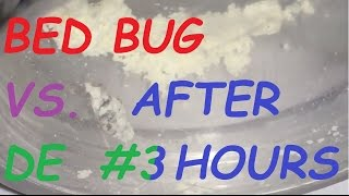Bed bug vs Diatomaceous Earth #3