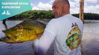 Бразилия. Ловля павлиньего окуня.(http://royal-safari.com/blog/fishing-reports/otchet-o-ryibalke-v-brazilii-1-7-noyabrya-2014/ Этот отдых в Бразилии для нас получился по настоящему..., 2014-12-24T18:51:05.000Z)