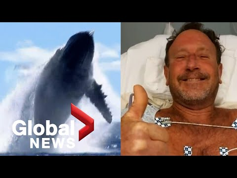 Whale of a tale: US diver survives nearly being swallowed by humpback whale