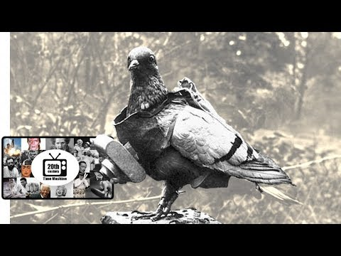 The Training of Homing Pigeons During WWI (silent film)