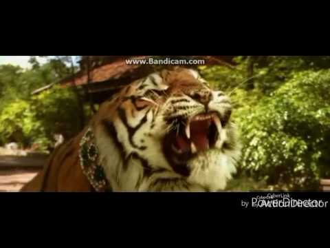 Amazing emotional story of two tiger brothers