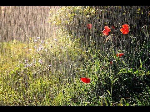 Релакс, дождь, ливень,