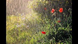 Релакс, дождь, ливень, гроза, звуки сна)