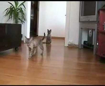 Mario and Cognac, Devon Rex - Tricks