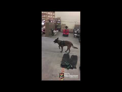 The Woody Show - Police Dog Is Not a Fan of Its Snow Boots