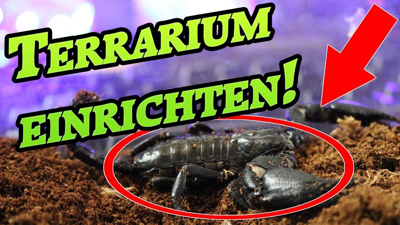 Terrarium einrichten  Schwarzer Skorpion  [! KEULE in GEFAHR !]  DIY YouTube ~ 07123836_Sukkulenten Terrarium Einrichten