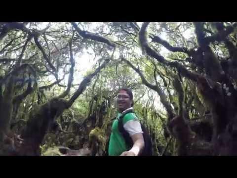 Mossy Forest Cameron Highlands 2015 GoPro