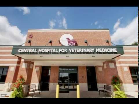 Central Hospital For Veterinary Medicine | New Haven, CT | Pet Services