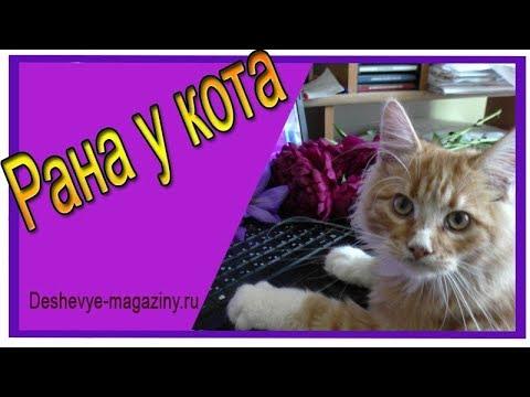 Вопрос: У кота опухла лапа, как лечить?