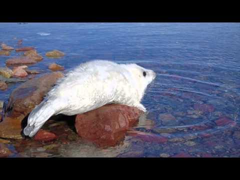 カナダ サンピエール島・ミクロン島の景色 Canada Saint Pierre et Miquelon