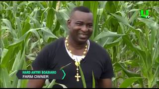 AYEKOO: Chairman Wontumi on Commercial Farming