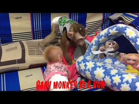 Monkey Baby play before they sleeping.