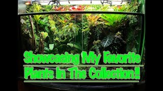 Setting up a DART FROG Vivarium Step by Step
