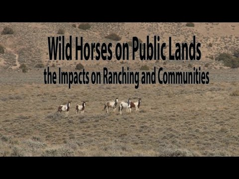 Wild Horse Management on Private and Public Lands Challenges and the Wild Horse and Burro Act