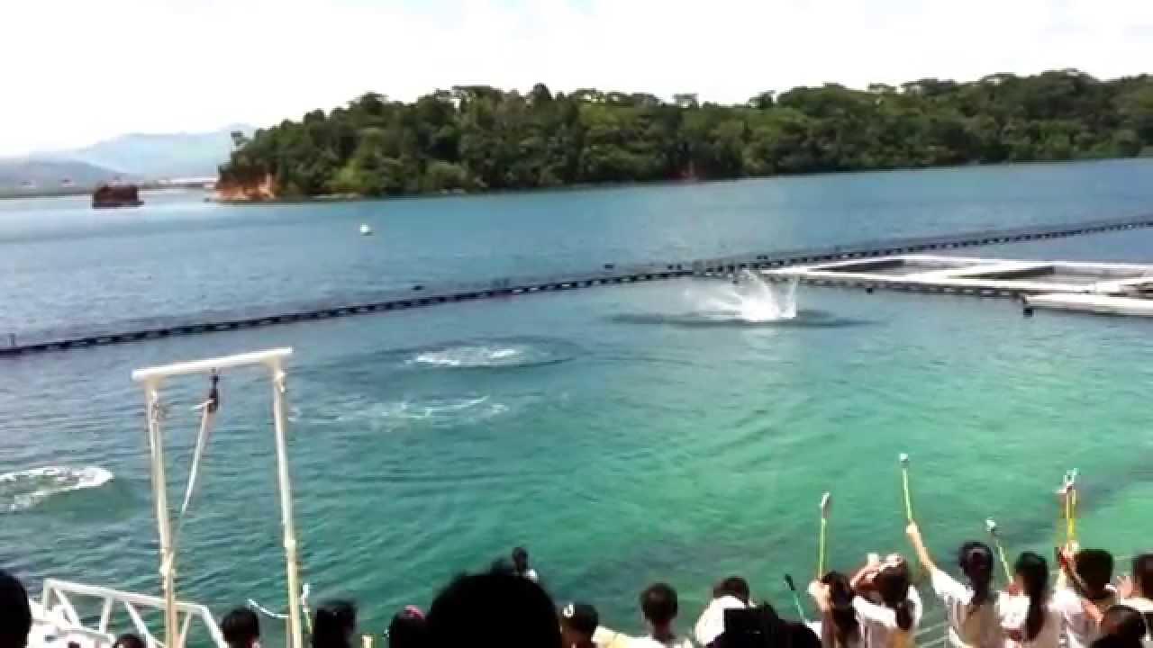 Subic Trip 2015 Zoobic Safari Camayan Beach Resort Ocean Adventure Youtube