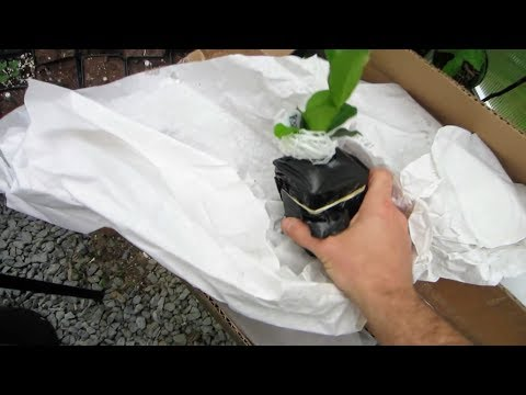 Tropical Fruit Tree Unboxing!
