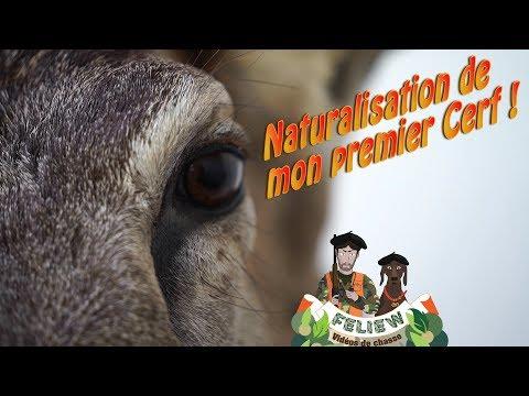 La naturalisation de mon premier cerf, tout savoir sur ce beau métier avec Alain Barbarin