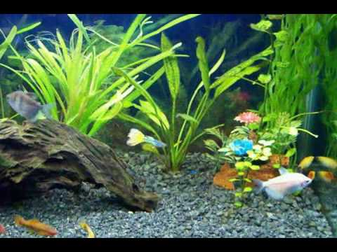 acuario comunitario tropical youtube