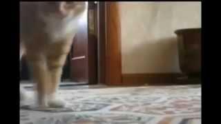 Лучшие приколы  Танцующие коты
