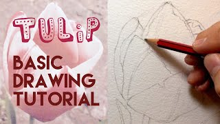 How to draw a Tulip Flower - Pencil tutorial