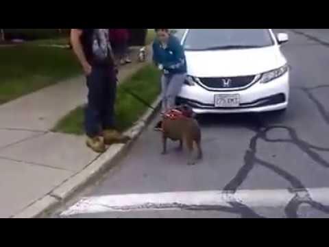 Dog Training Bedford Ma