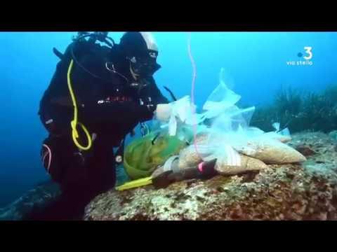 Ajaccio : une épave, d'une grande rareté, repose près des îles Sanguinaires