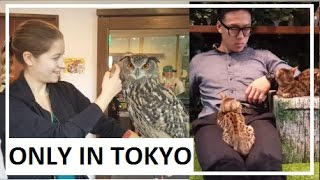 OWL CAFE and BENGAL CAT cafe // Tokyo, Japan - Oct 22