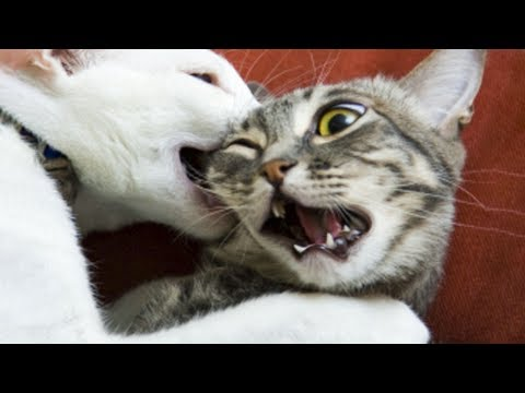 Funniest  Dogs and  Cats  Awesome and Funniest Animals Videos 2019