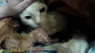 Родились двое котят