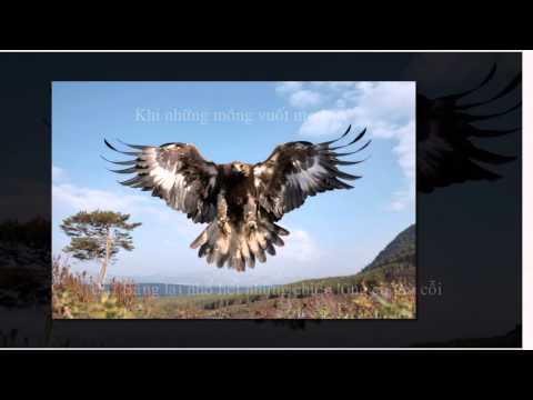 Câu Chuyện Về Chim Đại Bàng