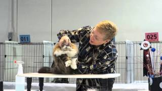 Tails and No Tales 2013 (Cat Show)
