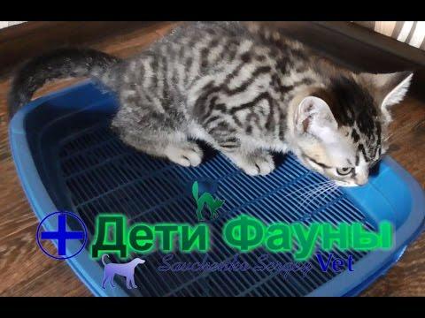 Как приучить кошек к лотку