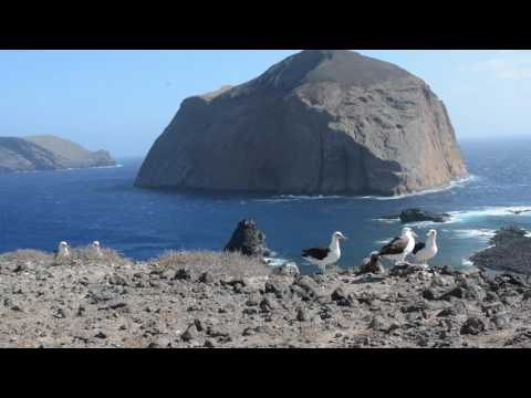 Natural Wonders: Guadalupe Island