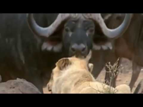ANIMALS MATING - TENSION between ELEPHANT & RHINO + Much More! [Full Animal Documentary] N