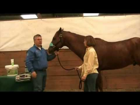 how to become a horse chiropractor