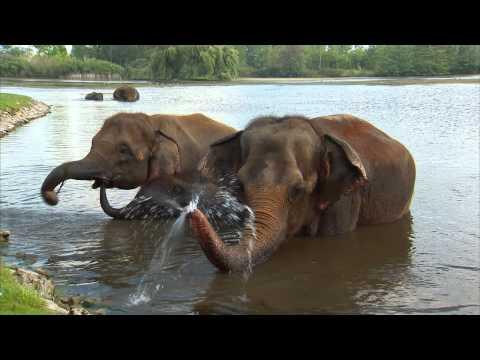 African Lion Safari- Join the Ferocious Fun!