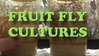 FRUIT FLY -Unboxing- for my Poison Dart Frogs +Phoenix Worms+