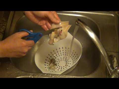 razor clam cleaning
