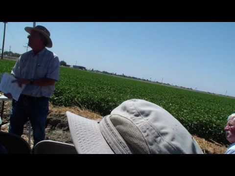 Disease Mgmt & Cotton Research Trials Results- Race 4, Fusarium, Early Pima Defoliation