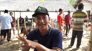 Download Video PASAR HEWAN (KAMBING) TERMURAH MP3 3GP MP4
