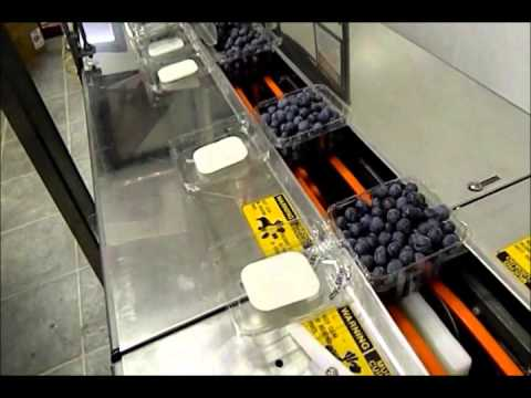 Packaging Blueberries At Happy Acres Farm 2014