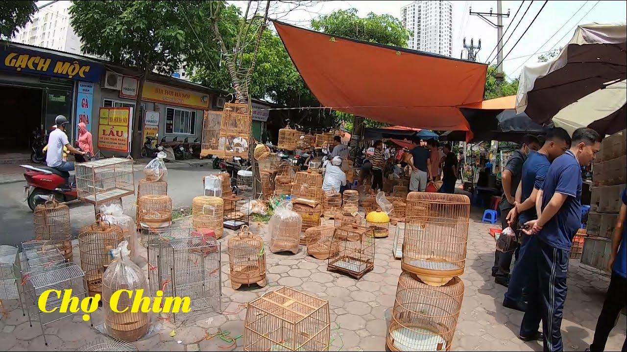 Phiên chợ chim cảnh độc đáo với những loại chim lạ – Bird Market