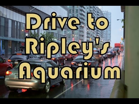 Drive from North York to Downtown Toronto (Ripley's Aquarium, CN Tower, MTCC)