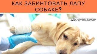 Как забинтовать лапу собаке?
